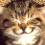 tebrikler-gülümseyen kedi